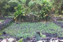 ®Benoit-CARPENTIER-Tahiti-Trip_5©BCarpentier